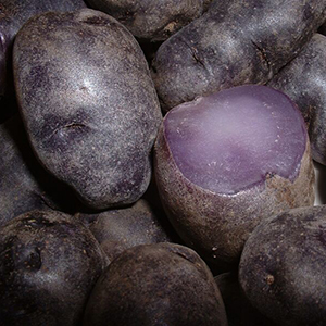 'Purple Peruvian' potato