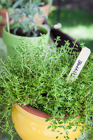 Ten Herbs to Start Growing