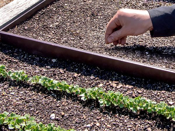 Spring Planting Start Dates