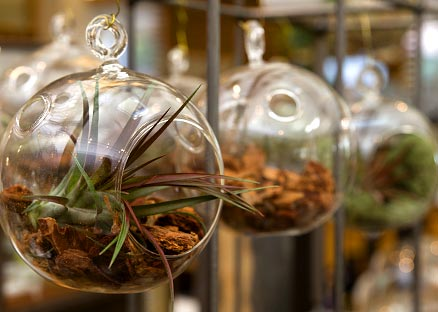 terrariums in the shop