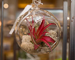 PHOTO: Tillandsia ornament.