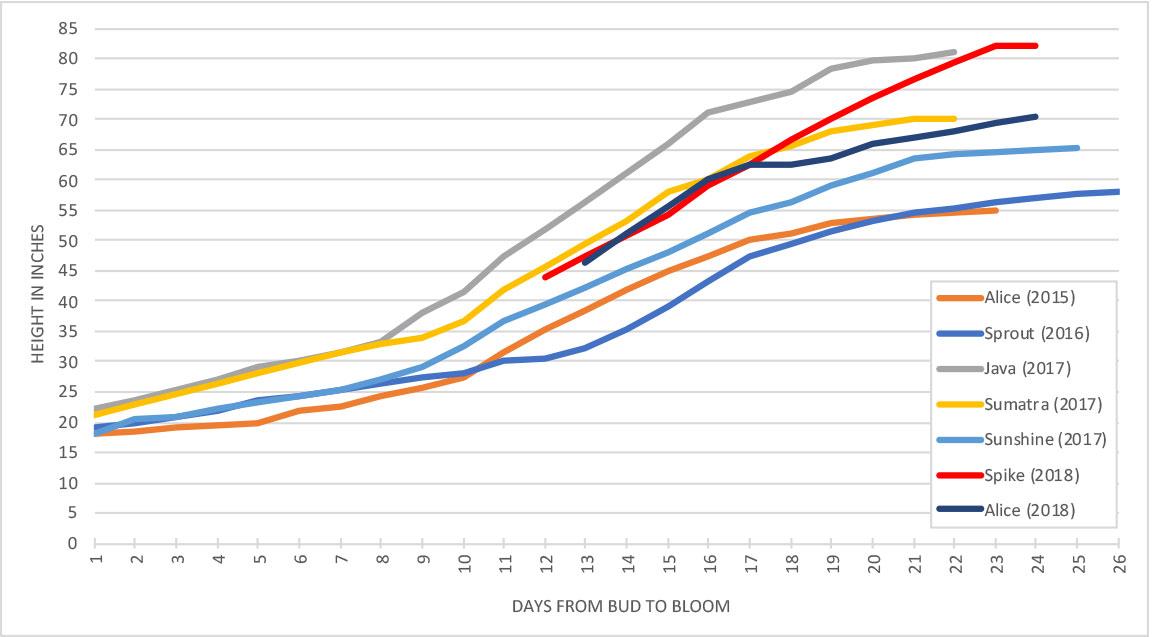 Titan Arum growth progress chart