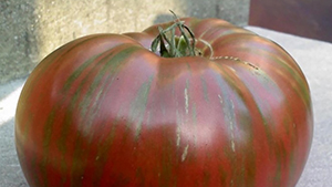 Fred's Tie-Dye heirloom tomato