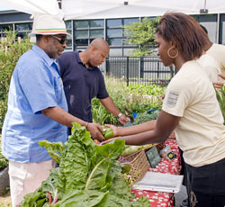 Windy City Harvest Youth Farm Program Components