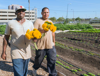 Windy City Harvest Apprenticeship Programs