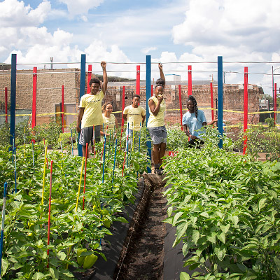 North Lawndale Youth Farm