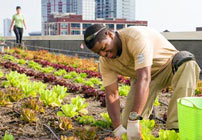 Windy City Harvest Corps
