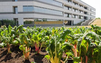 Kraft Foods Garden
