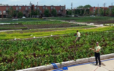 Windy City Harvest Apprenticeship Farm Locations Chicago