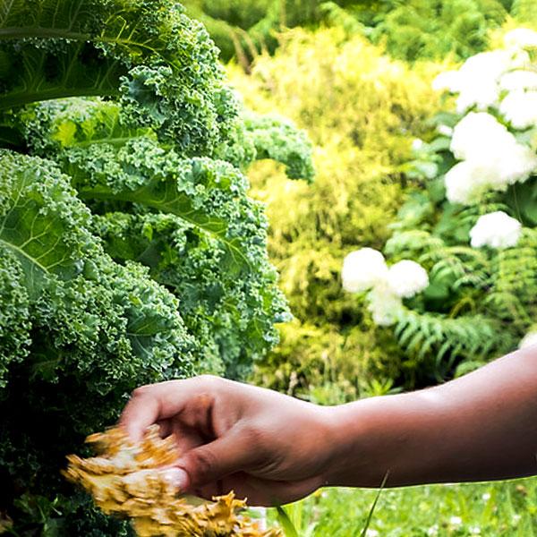 Gardening Information
