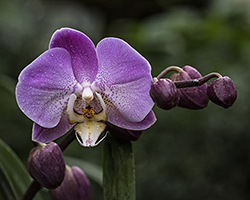 Watering Orchids FAQ