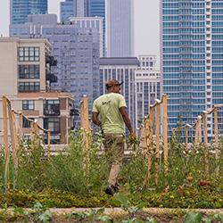 Rooftop Farming