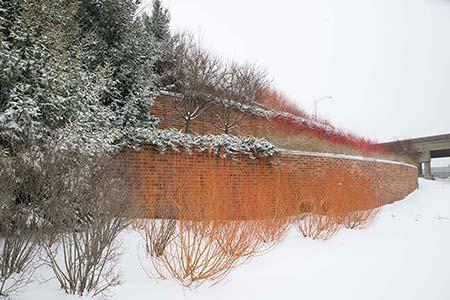 PHOTO: Garden wall