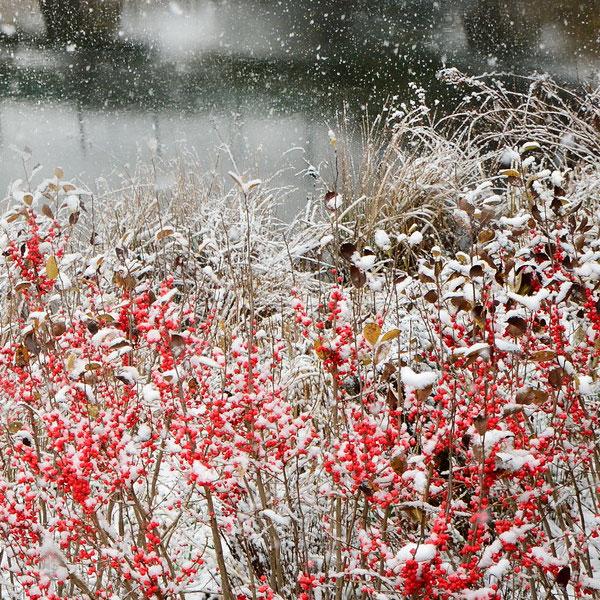 Winter Awe