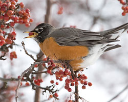 Attracting Birds in Winter
