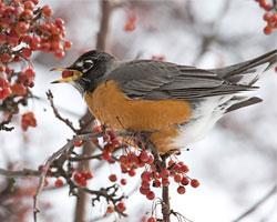 Attracting Birds in Winter
