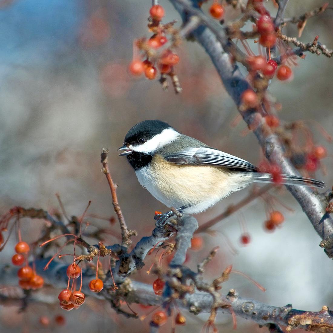 Winter - Outdoor Adventures