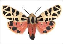 The Hidden Beauty of Moths