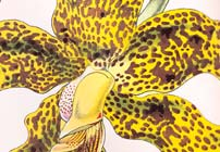 Orchidology: Orchidaceous Investigations