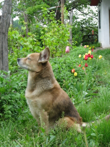 PHOTO: Dog in the garden