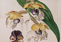 Picturing Tropical Orchids