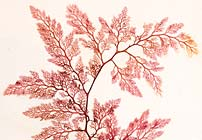 Pressing for Plants: Herbaria in Books
