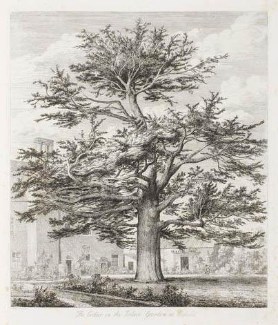 ILLUSTRATION: a massive tree illustration by Jacob Strutt