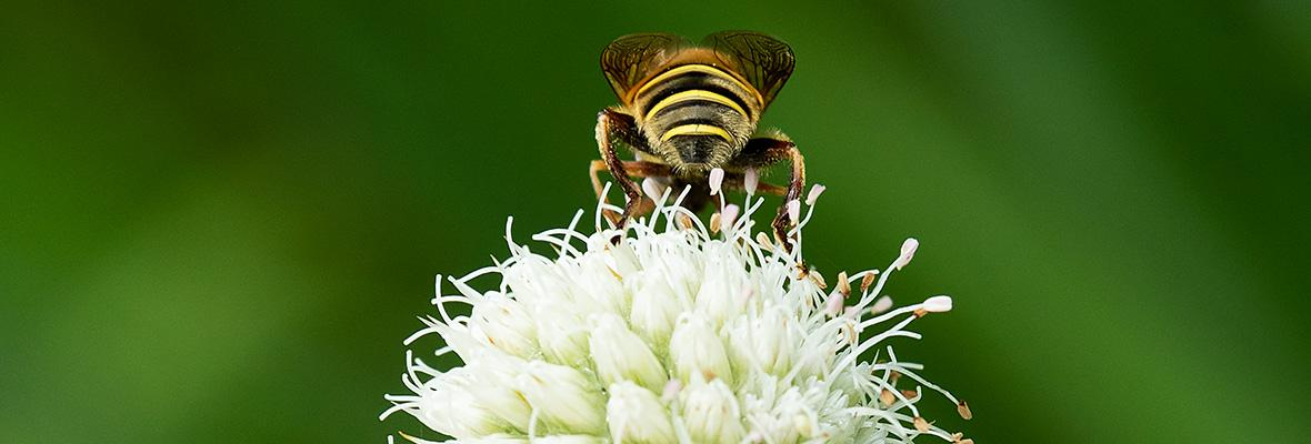 Bees & Beyond