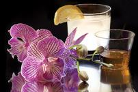 Evening with Orchids