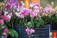 Charmant Post Orchid Show Plant Sale