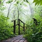 Woods Poetry Walk