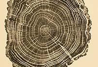 Woodcut, Prints by Bryan Nash Gill