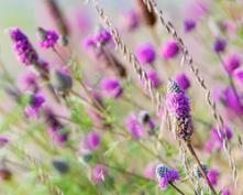 The Peak of the Prairie: Plants to Know and Grow