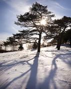 Photographing the Garden in Winter