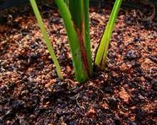 Soils, Part 2