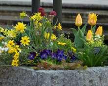 PHOTO: Spring planter.