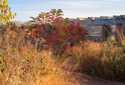 Native Plant Garden in fall