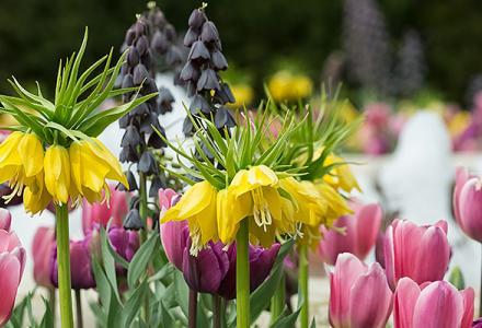 Sensory Garden in spring