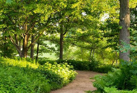 Sensory Garden in summer