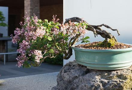 Bonsai Collection Spring