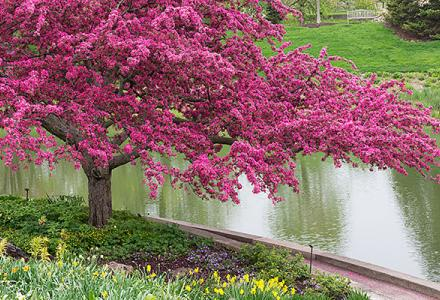 Bulb Garden in spring