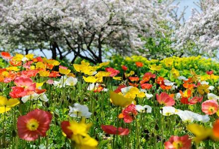 English Oak Meadow in spring