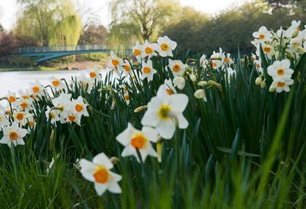 Evening Island Spring