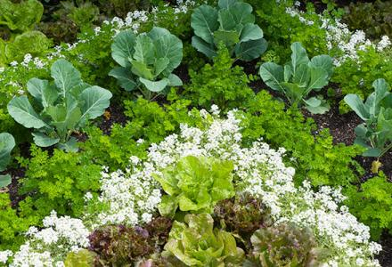 Fruit and Vegetable Garden Spring