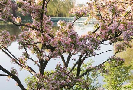Lakeside Gardens in spring