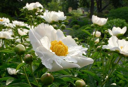 Landscape Garden Spring