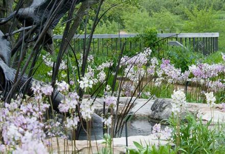 Native Plant Garden in spring