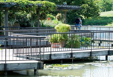 Aquatic Garden in summer