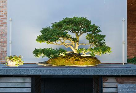 Bonsai Collection Summer