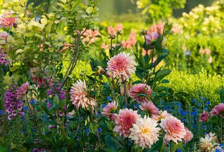 Crescent garden in summer